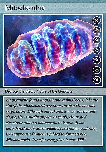 Anti-Aging, mitochondria, and signals