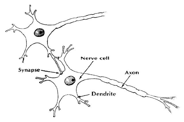 brain connection diagram