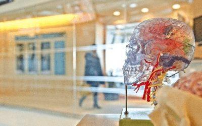 Autistic brain responds the same