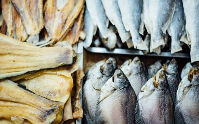 Fish oils and pregnancy lessens lifetime of Asthma